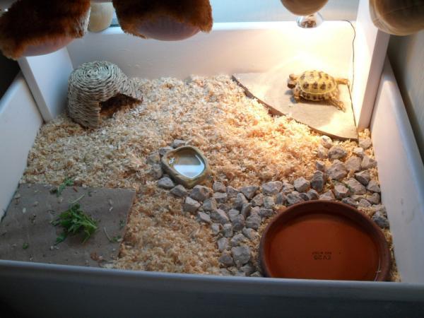 Домашние сухопутные (земноводные) черепахи: описание, где