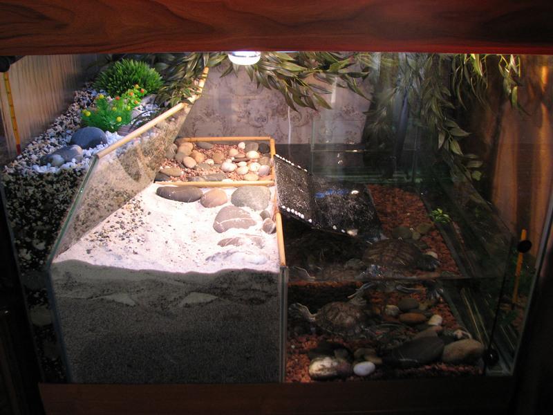 Островок для красноухой черепахи своими руками (фото) 35
