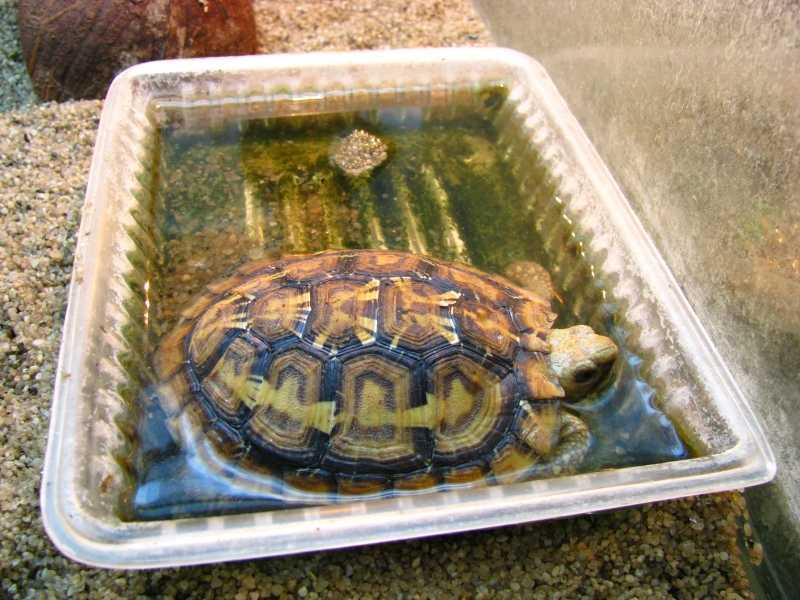 Кормить черепаху в домашних условиях