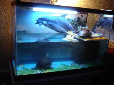 европейская болотная черепаха в домашних условиях как содерджать