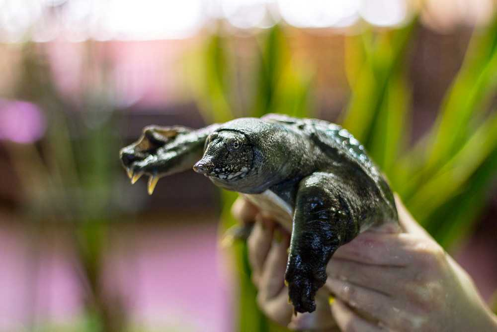 Лечение черепахи в домашних условиях
