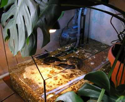 Вода для красноухих черепах из под крана